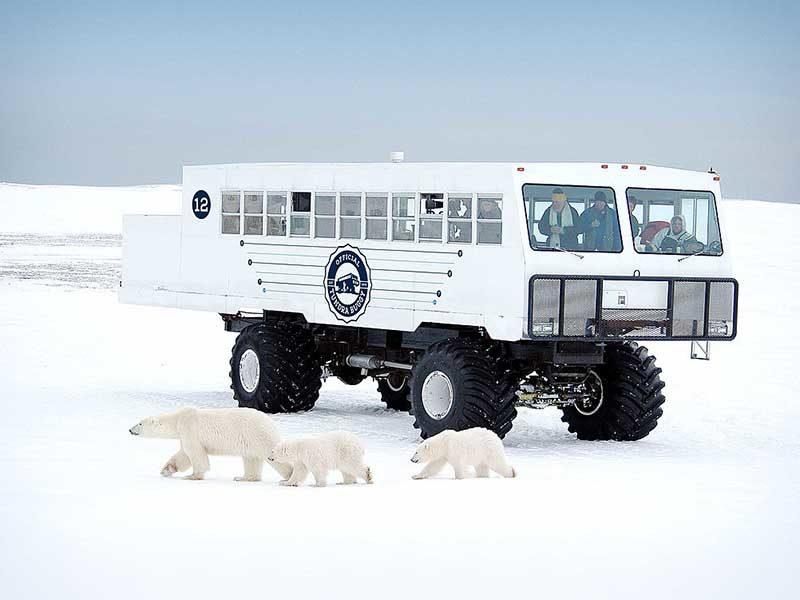 """Уникальный канадский вездеход Tundra Buggy: с его помощью наблюдают за белыми мишками, а выглядит он очень по """"канадски"""""""